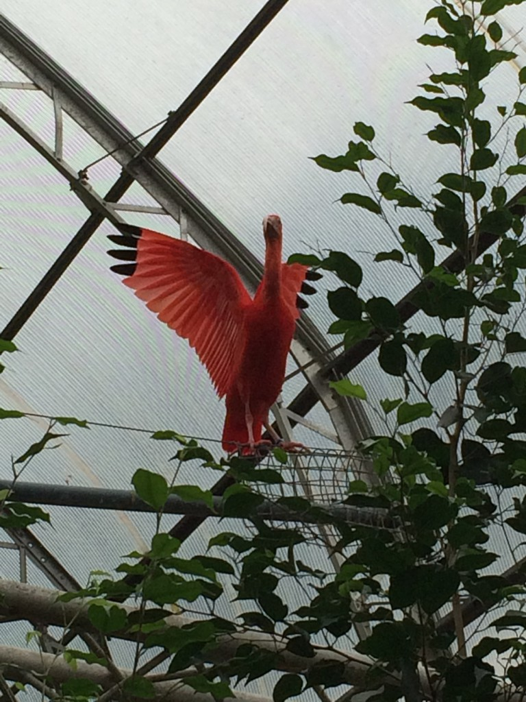Erm... some sort of bird