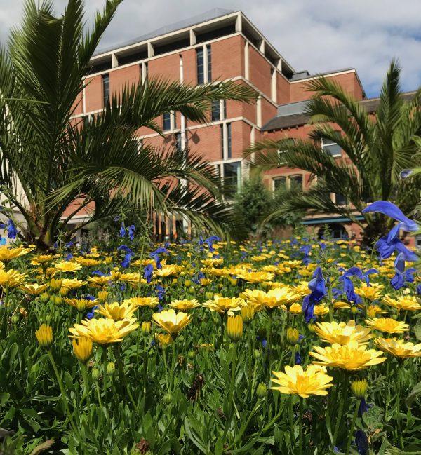Flowers in Mandela Gardens